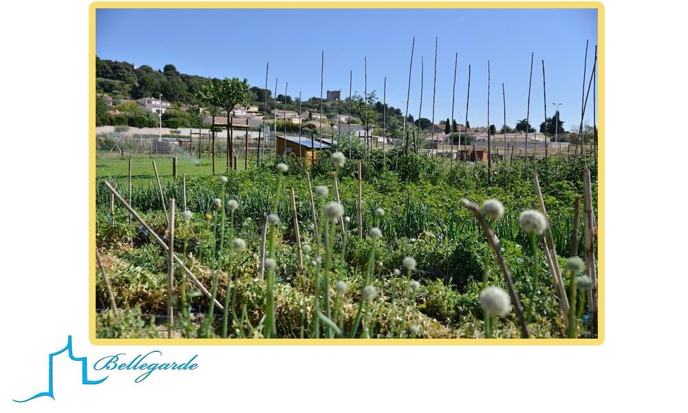 L'eau une ressource Vitale Samedi 3 octobre -9h30-12h30- Jardins familiaux de Bellegarde